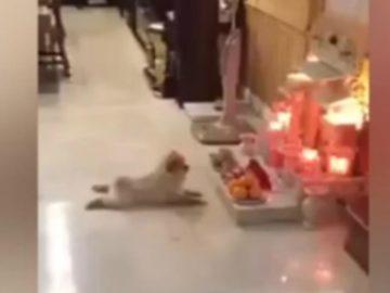 perro-altar-muerto