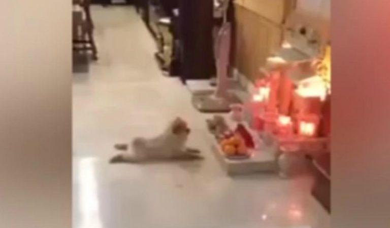 Perro actúa de manera extraña ante un altar de muertos