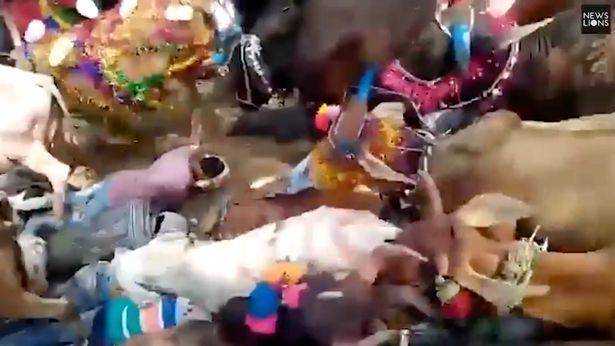 Rebaño de vacas camina sobre fieles religiosos