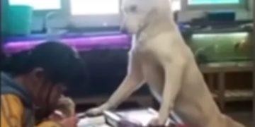perro-celular