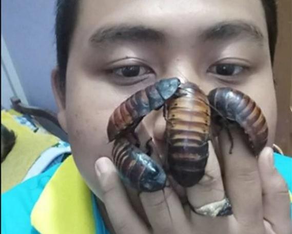 cucaracha-challenger