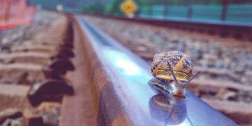 caracol_detiene_tren