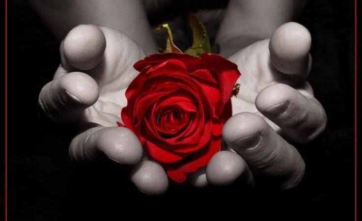 Enamora a su vecina enviándole 500 ramos de flores a domicilio