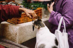 Gato aparece con deudas a su casa