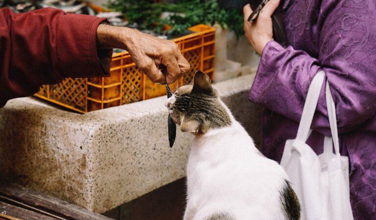 Gato desaparece tres días y regresa con cuenta del pescado que se comió!