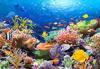 Luego de 120 años encuentran un arrecife coral en Australia