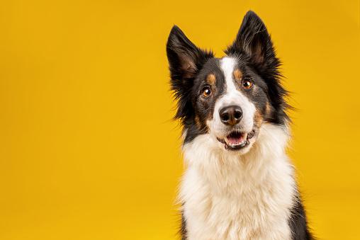 Collar que interpreta los ladridos de los perros y los traduce en emociones